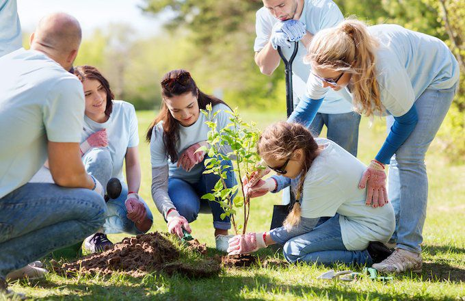 people-planting-tree